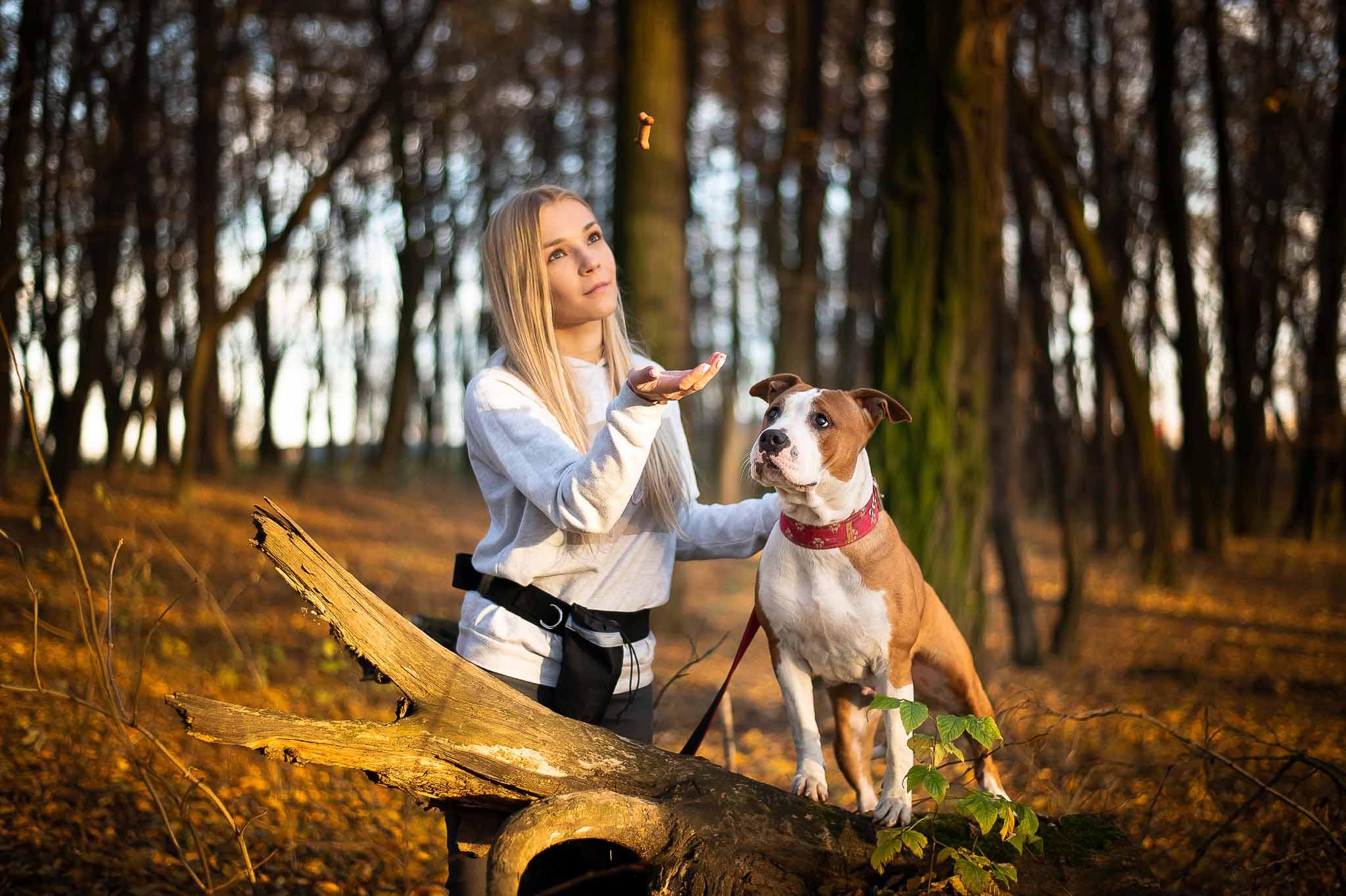 Hodowla Amstaffów - Amstaffy.pl - Hodowla psów rasowych - Amstaff